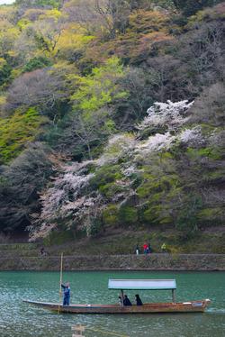 金閣寺、龍安寺、そして桜が舞う嵐山でお好み焼き