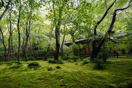 緑に包まれて、祇王寺
