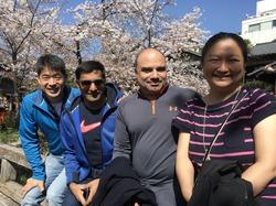 桜満開ツアー! 清水寺、八坂庚申堂、茶道体験、金閣寺、嵐山