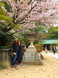 北野天満宮、海津大崎で桜の見納めツアー