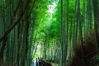 嵐山散策ツアー