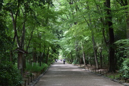 東山ハイライトツアー