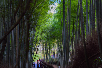 ディープ京都ツアー:嵐山、西陣、綴れ織り工房ツアー